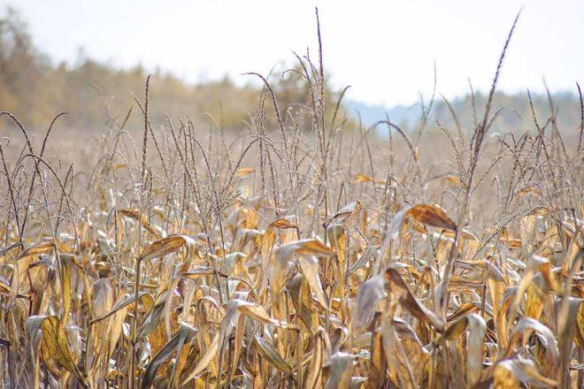Trockenheit in Brandenburg: Präzise Bewässerung soll das Problem lösen