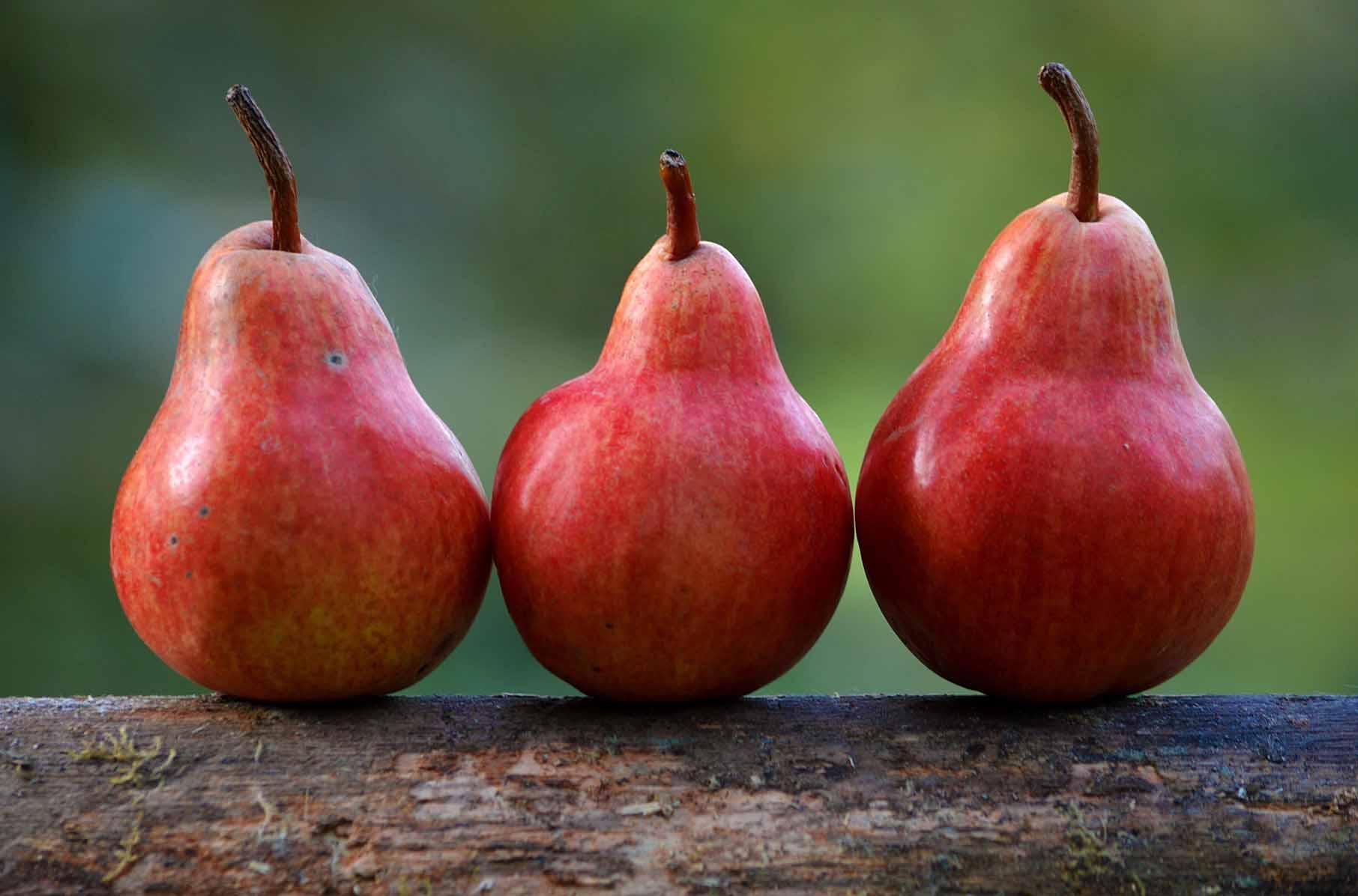 Der Birnbaum, den Herr von Ribbeck gepflanzt hat, ist nicht das einzig bemerkenswerte des Ortes Ribbeck. Foto: gemeinfrei/Pixabay