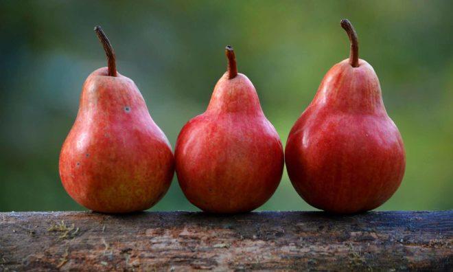 Der Birnbaum, den Herr von Ribbeck gepflanzt hat, ist nicht das einzig bemerkenswerte des Ortes Ribbeck. Foto gemeinfrei (Pixabay)