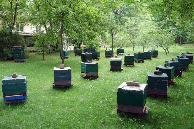 Bienenstöcke in Hohen Neuendorf