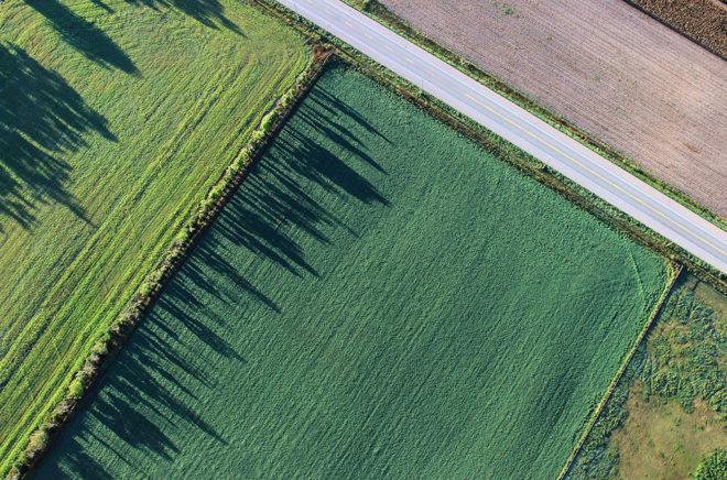 Agrowirtschaft kombiniert beim Anbau Ackerpflanzen und Gehölze (Foto: Pixabay)